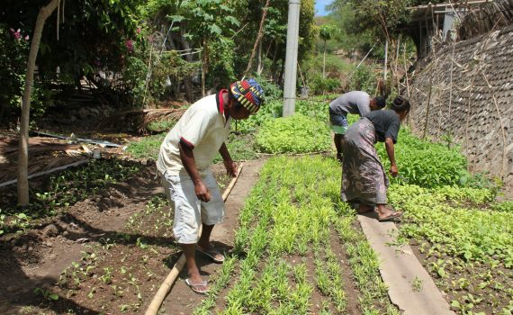 Sustainable gardens helping livelihoods grow